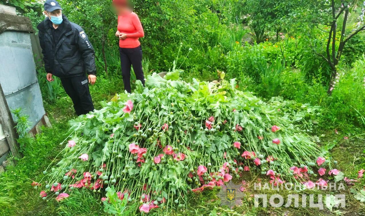 Под Одессой пенсионерка выращивала наркотический мак (фото) «фото»