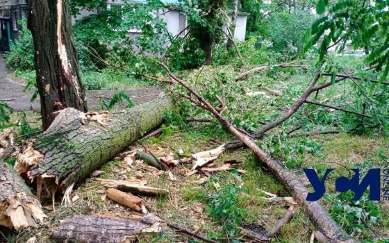 На поселке Котовского непогода валит деревья (фото) «фото»
