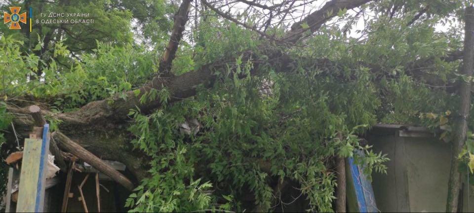 В Одесской области дерево упало на жилой дом (фото) «фото»