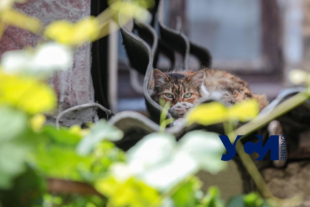 В субботу одесситам обещают жару, а жителям области – грозы «фото»