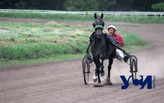 Бега, призы и экскурсии на конюшни: на Одесском ипподроме прошли скачки (фото) «фото»