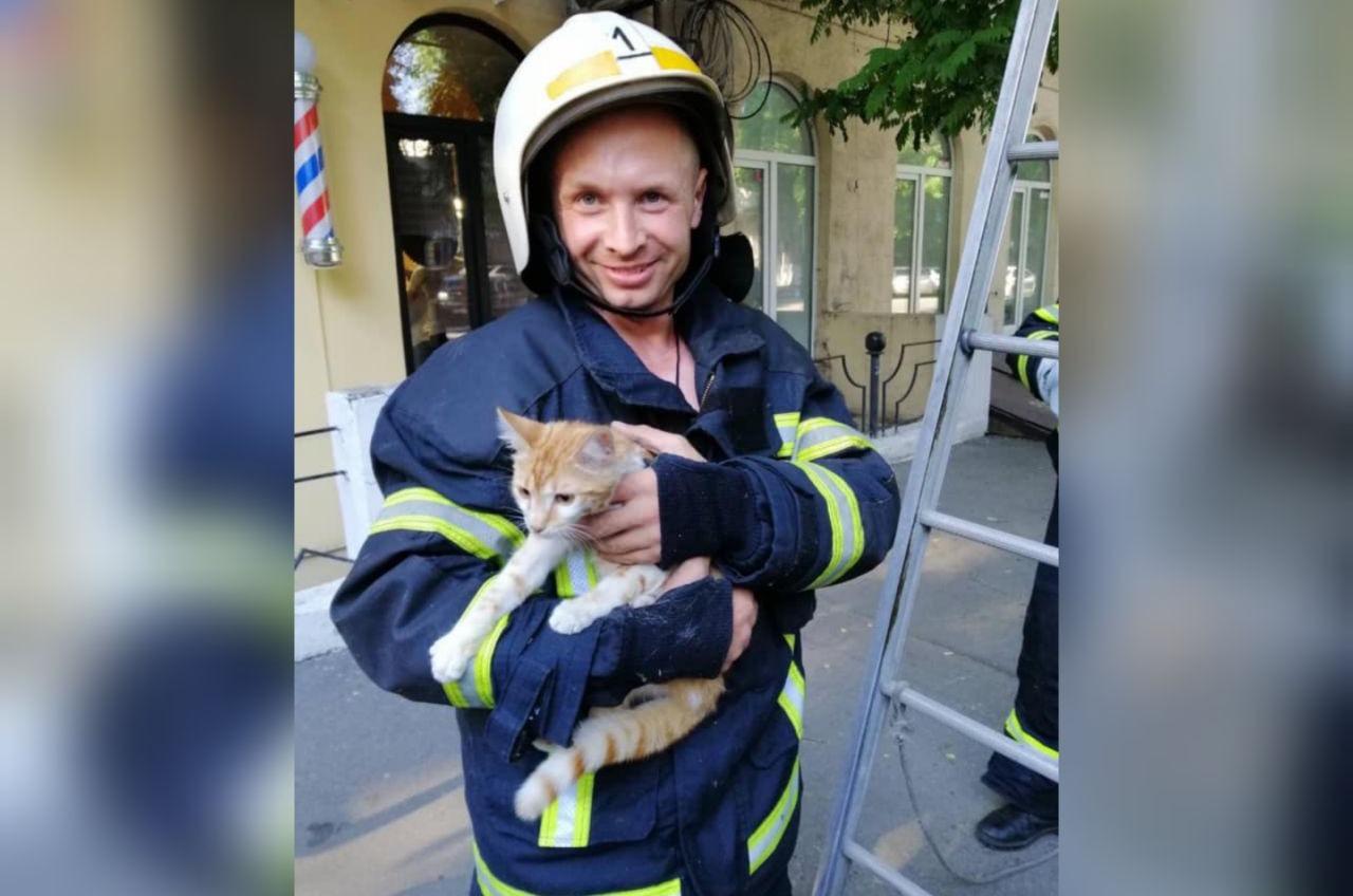 На Троицкой спасатели пришли на помощь коту (фото) «фото»