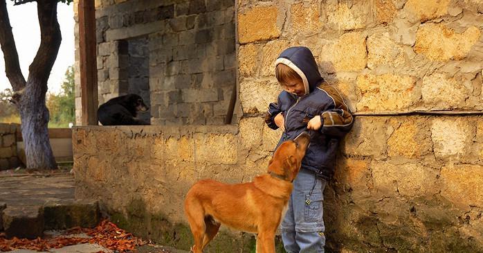В Одесской области суд отобрал у пенсионера собаку, которая покусала ребенка «фото»