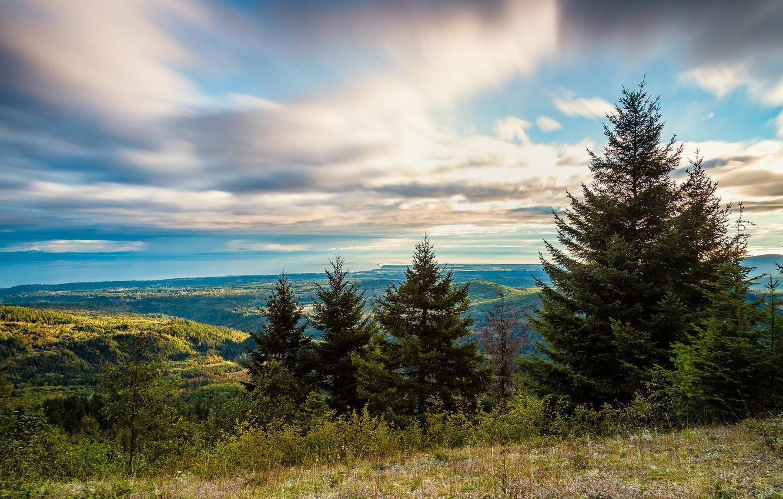 Миллиард деревьев за 3 года: Зеленский подписал указ о восстановлении лесов «фото»