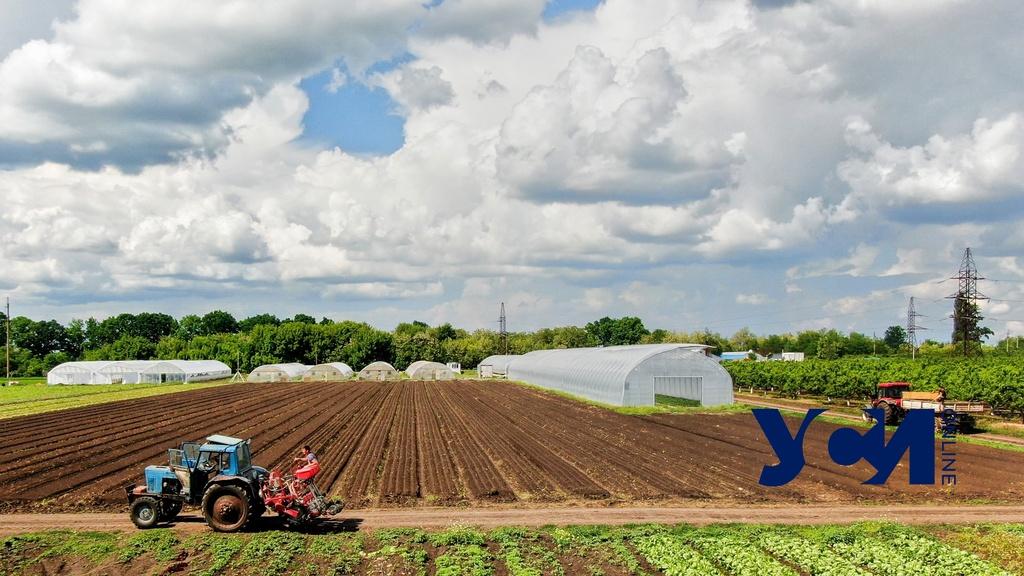 Фермеры Одесской области получат 240 миллионов поддержки от государства «фото»