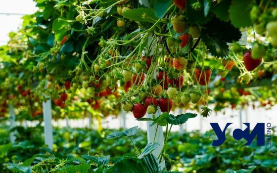 Экскурсия на ферму: одесский фермер выращивает эко-салат, овощи и фрукты (фото, видео) «фото»