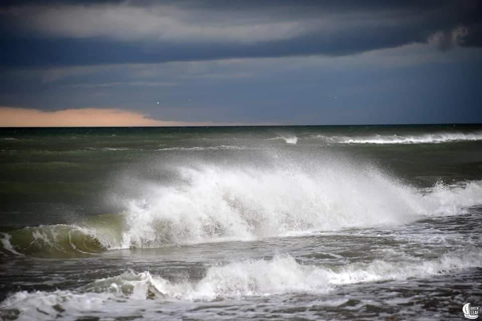 Оливковый прилив: в Одесской области «зацвело» море (фото) «фото»