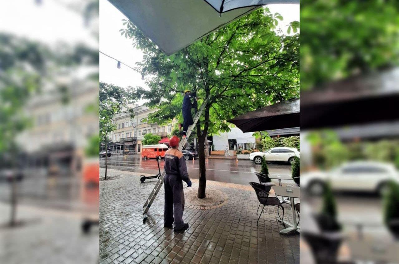 На Екатерининской освобождают деревья от различных конструкций (фото) «фото»