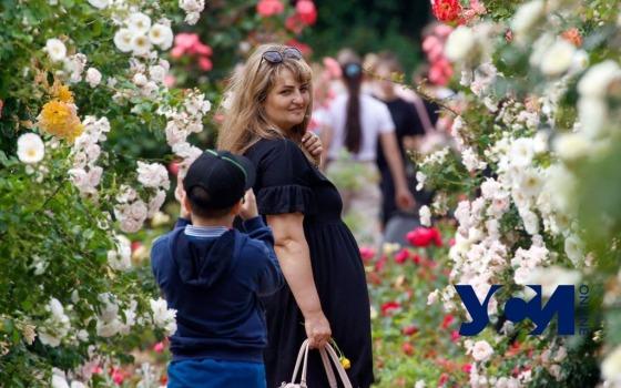 В самом цвету: розам одесского Ботсада дожди пошли на пользу (фото) «фото»