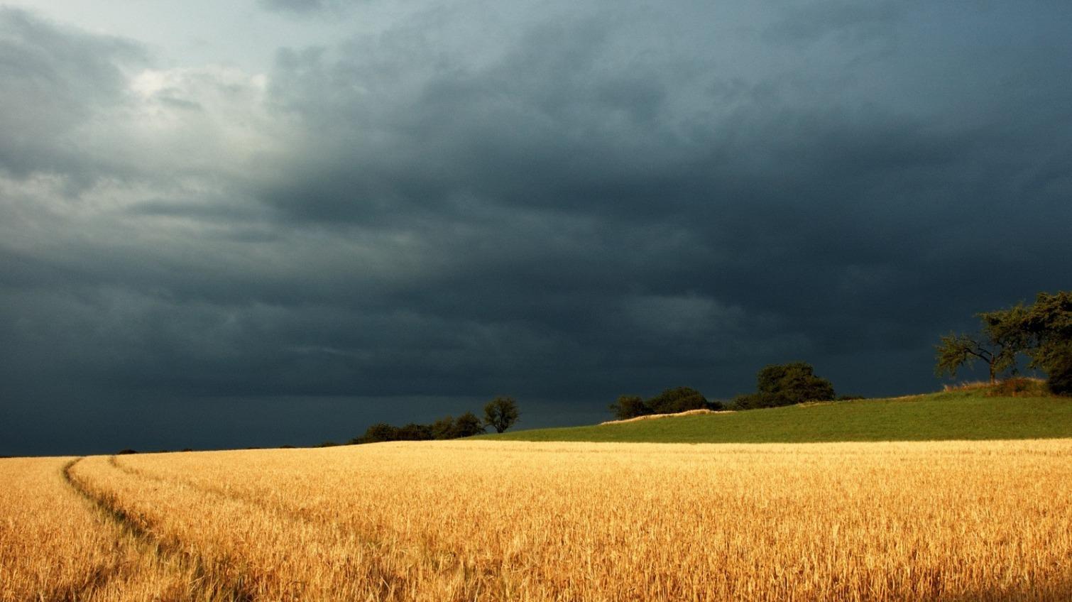 Из-за обильных дождей одесские фермеры могут потерять часть урожая «фото»