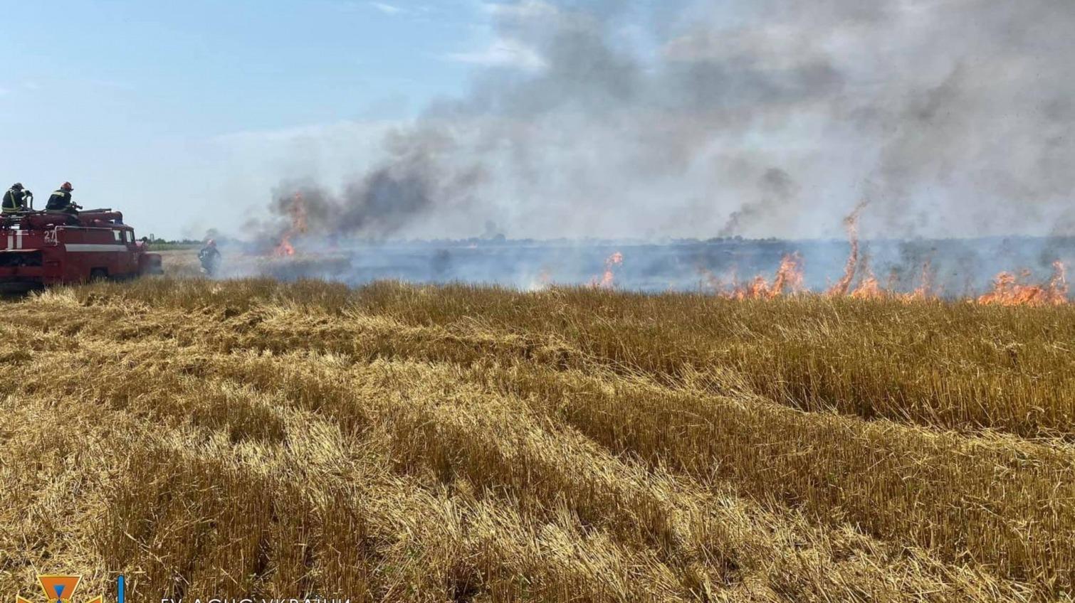 В Одесской области горели поля с пшеницей (фото) «фото»