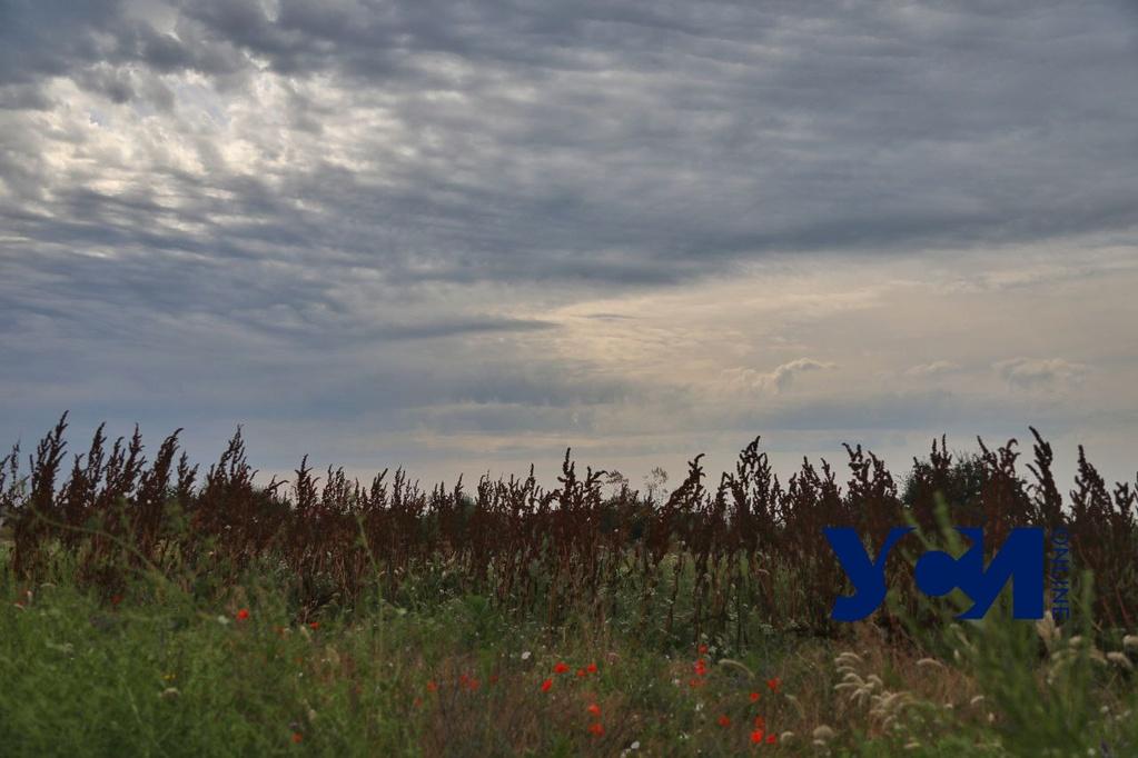 В пятницу в Одессе возможен дождь с грозой «фото»