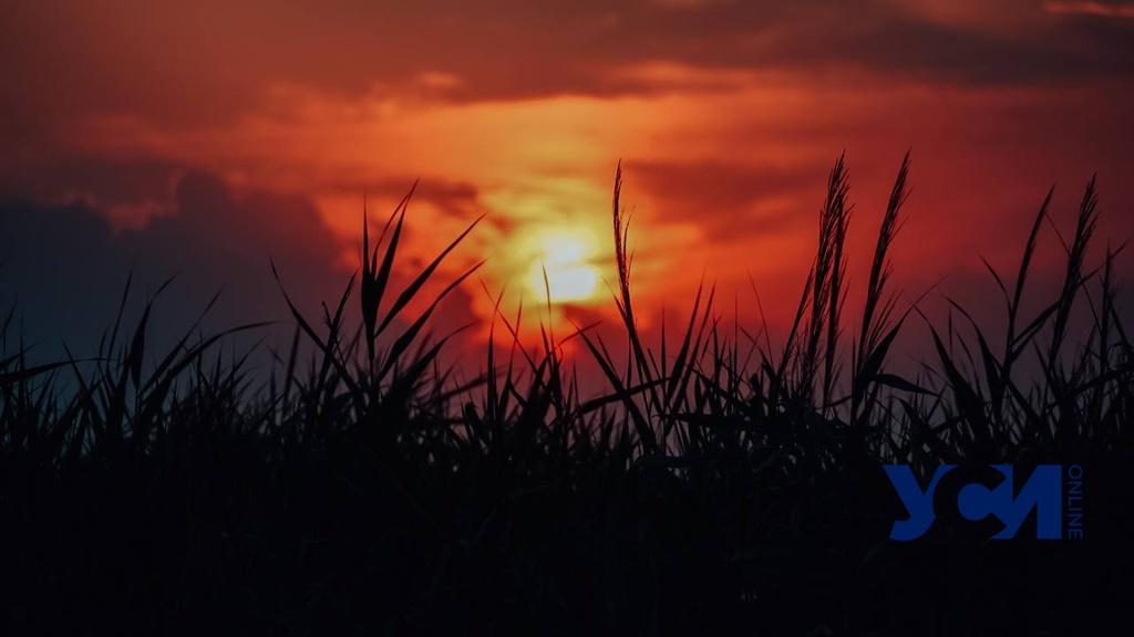 Последний закат июля на Куяльницком лимане (фото) «фото»