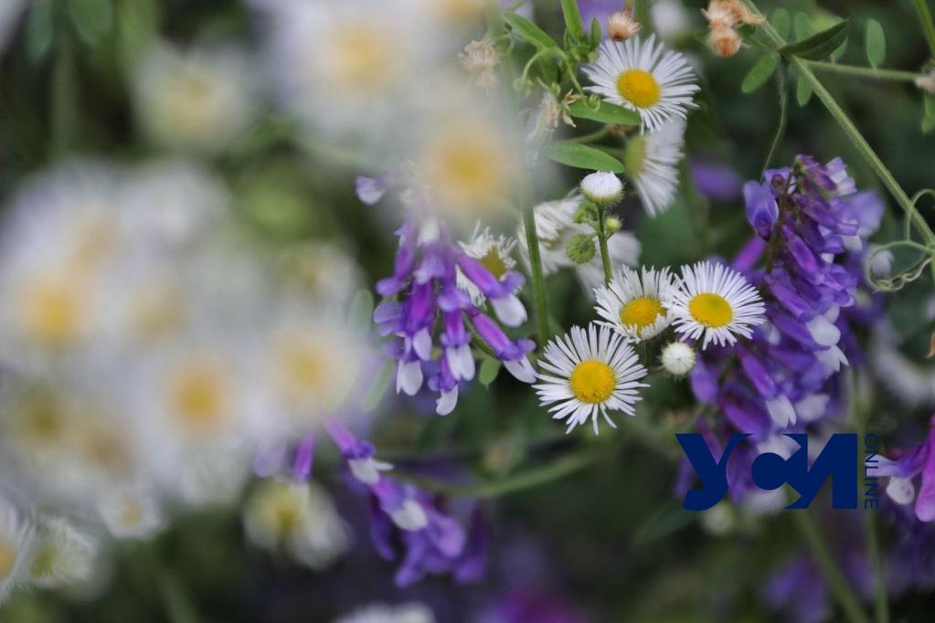 Утро в Черноморке: яркие полевые цветы под мрачным небом (фото) «фото»