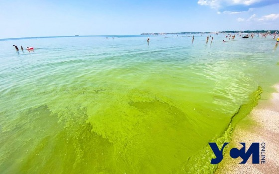 Под Одессой позеленело море (фото) «фото»