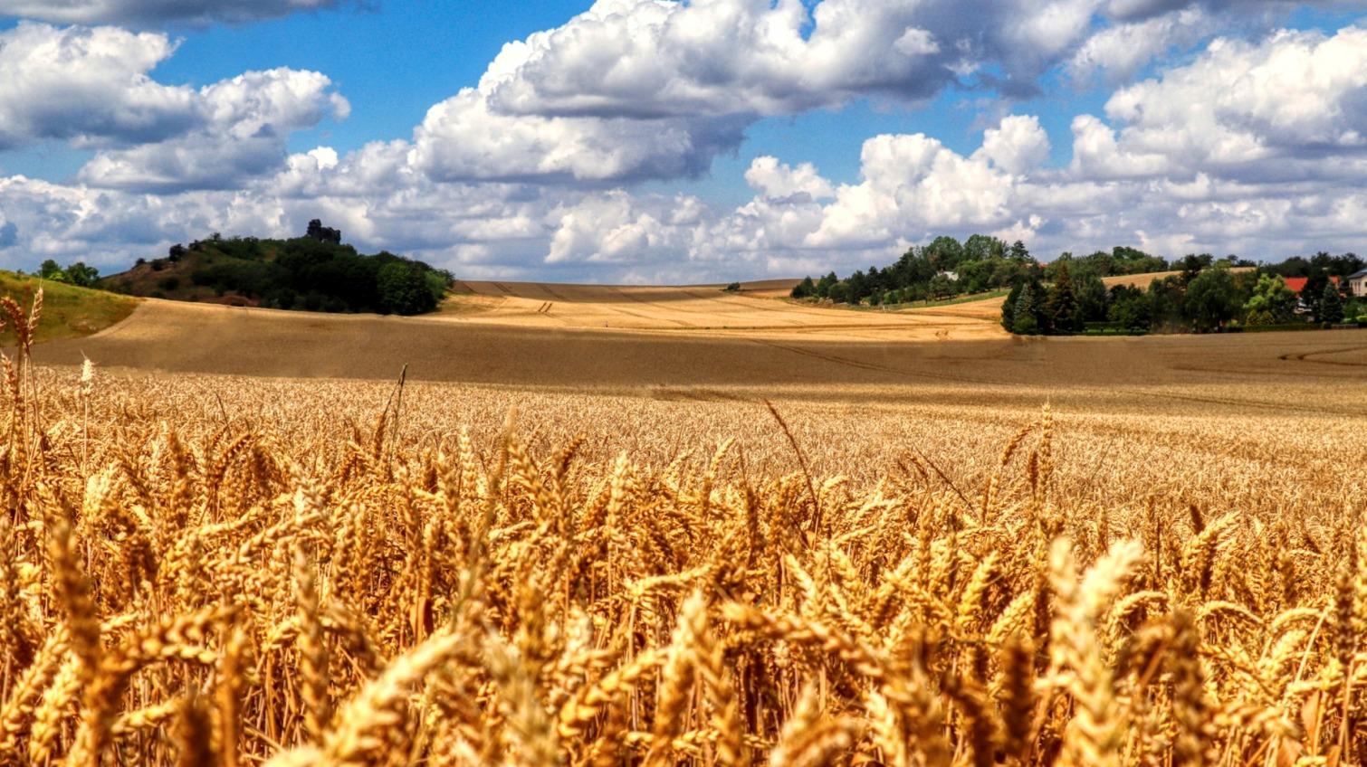 Аграрии Одесской области собрали первый миллион тонн зерновых «фото»