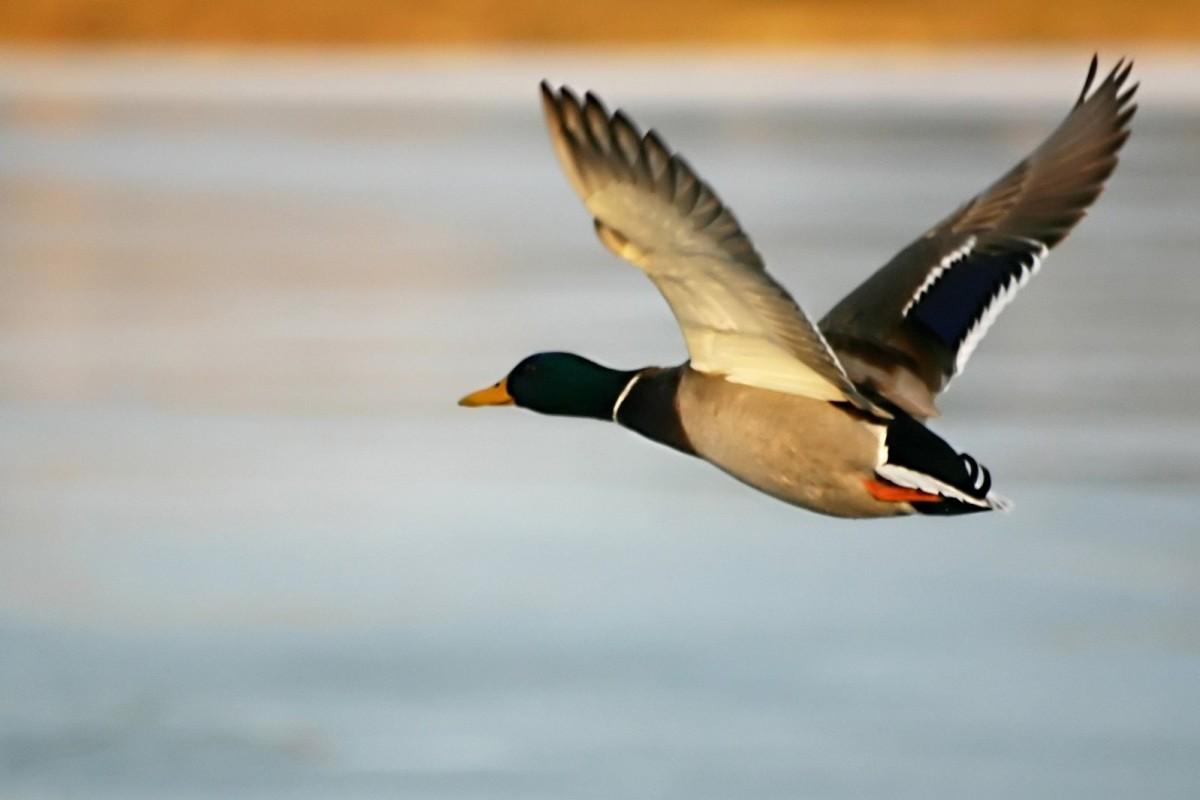 Сезон охоты откроют через три недели: на кого можно охотиться «фото»