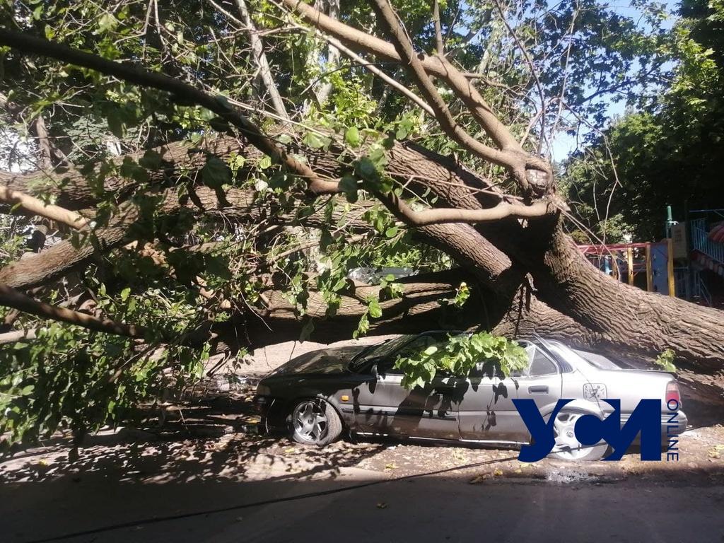 На Черемушках рухнуло старое дерево: пострадали три машины (фото) «фото»
