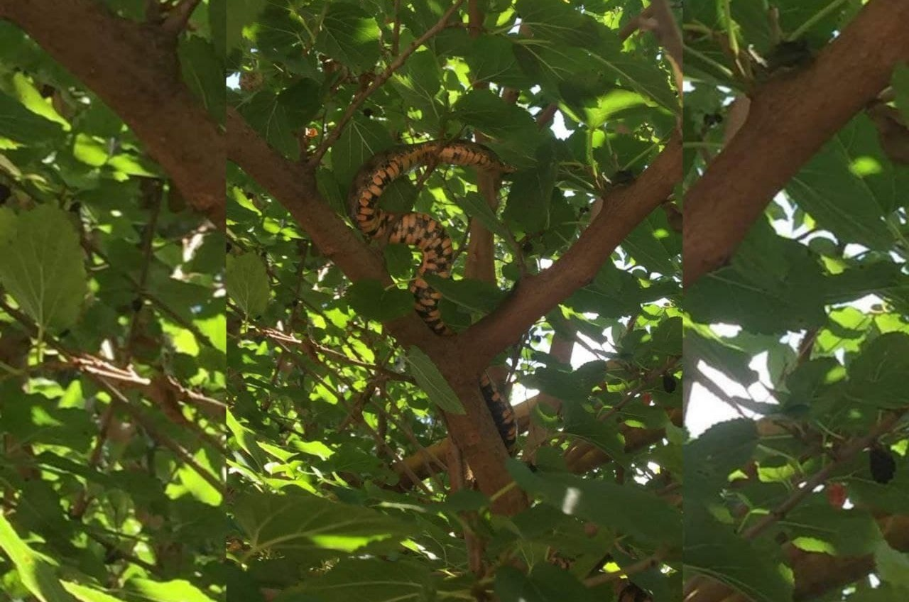 Одесситов напугала змея, которая поселилась на дереве «фото»