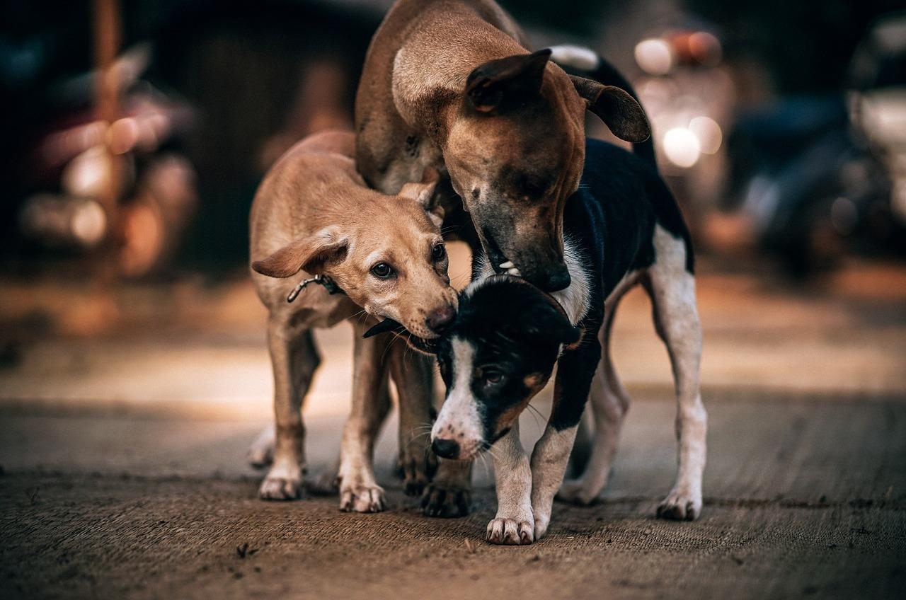 Круиз на стерилизацию: бездомных собак из Аккермана будут переправлять в Одессу «фото»
