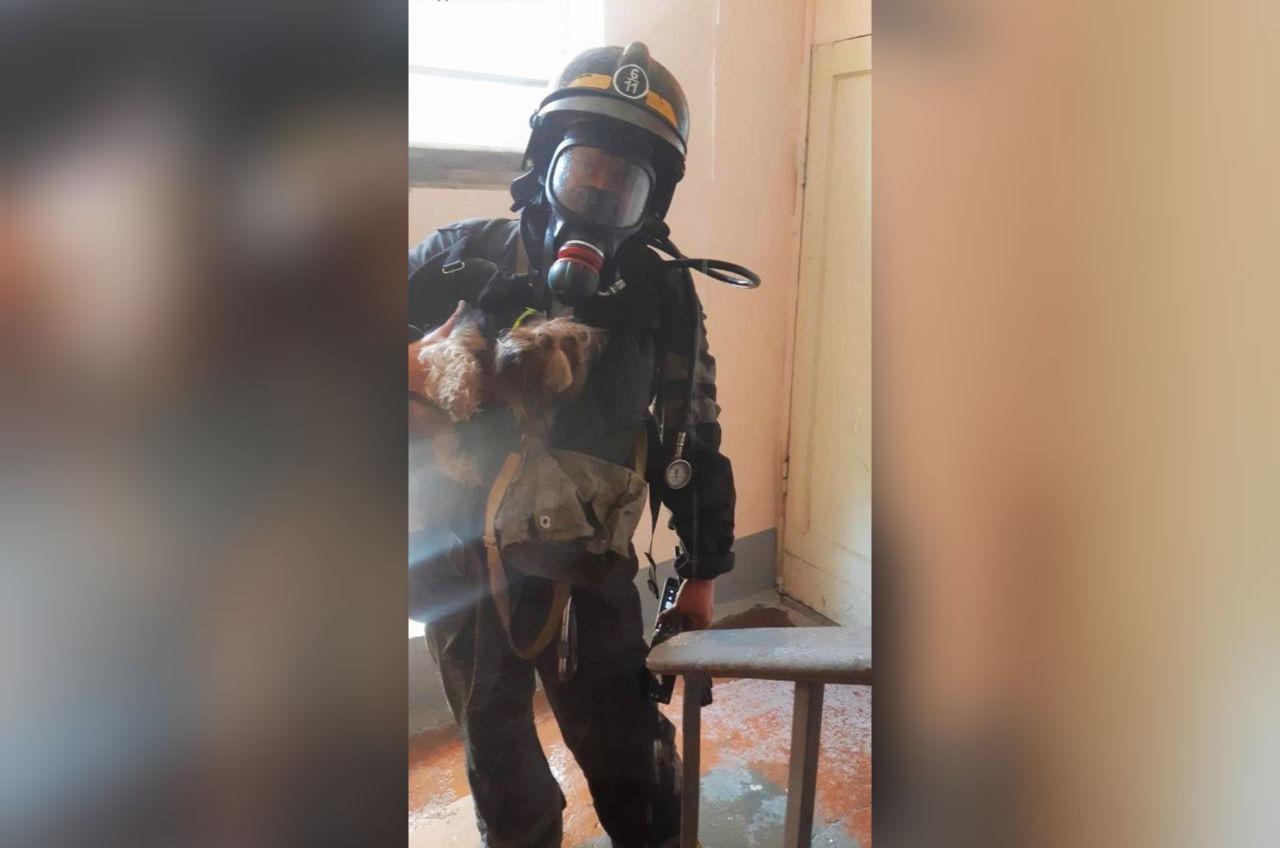 На пожаре в Киевском районе спасли собаку «фото»