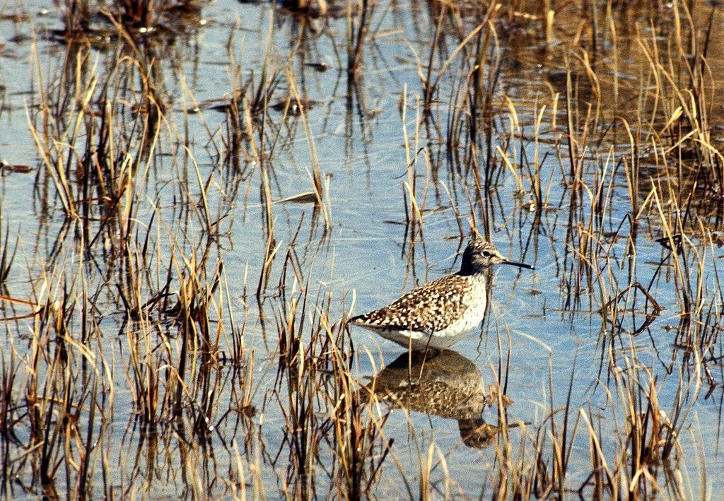 Гуси, голуби, лысухи: в Одесской области начинается охотничий сезон «фото»