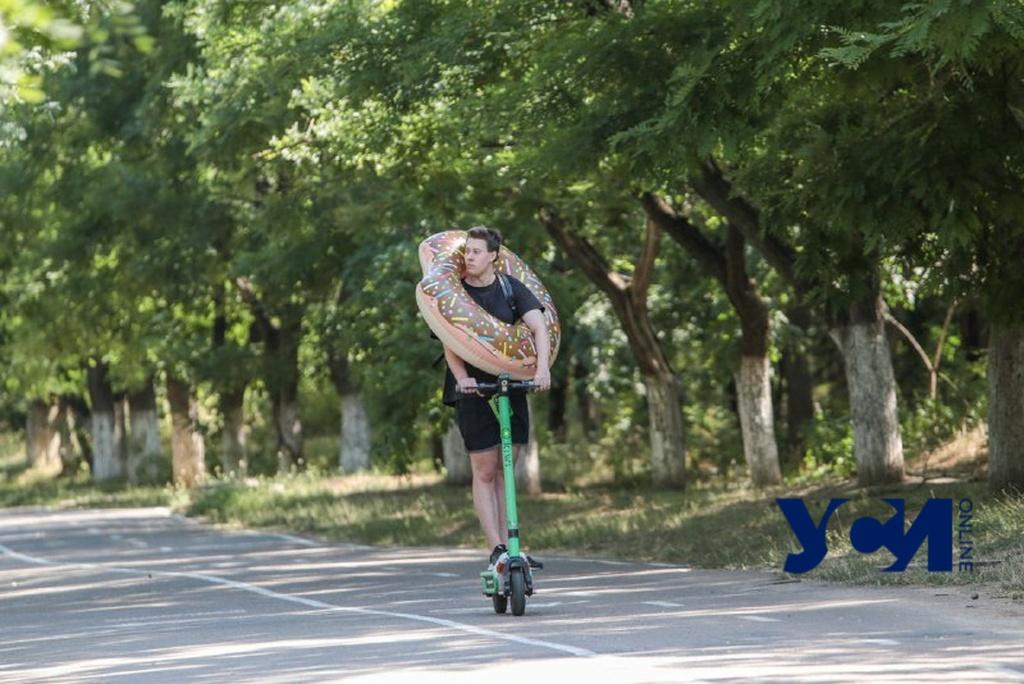 Буйство зелени и активный отдых на Трассе здоровья (фото) «фото»