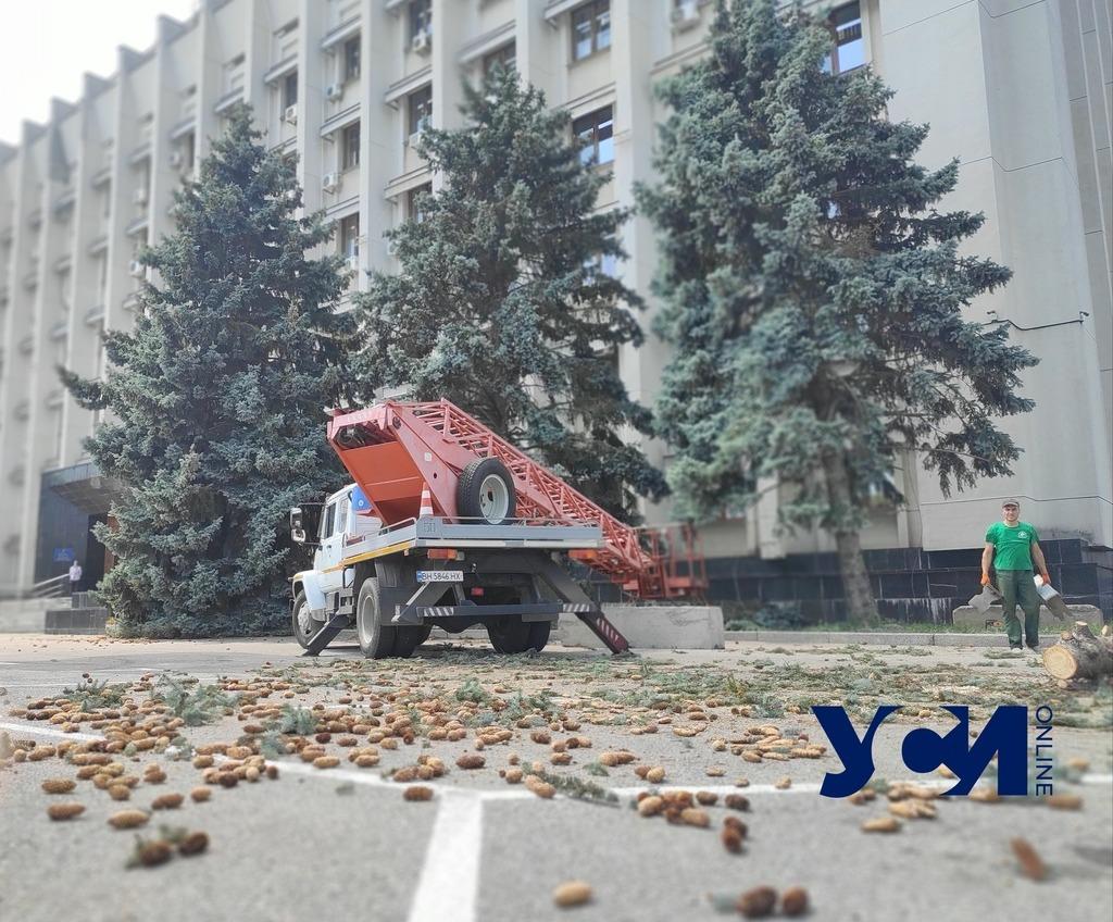 Возле Одесской ОГА сносят большие ели (фото) «фото»