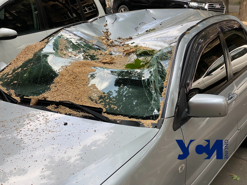 Слава Богу, что детей не было рядом: на Пастера огромная ветка разбила два авто (фото, аудио) «фото»