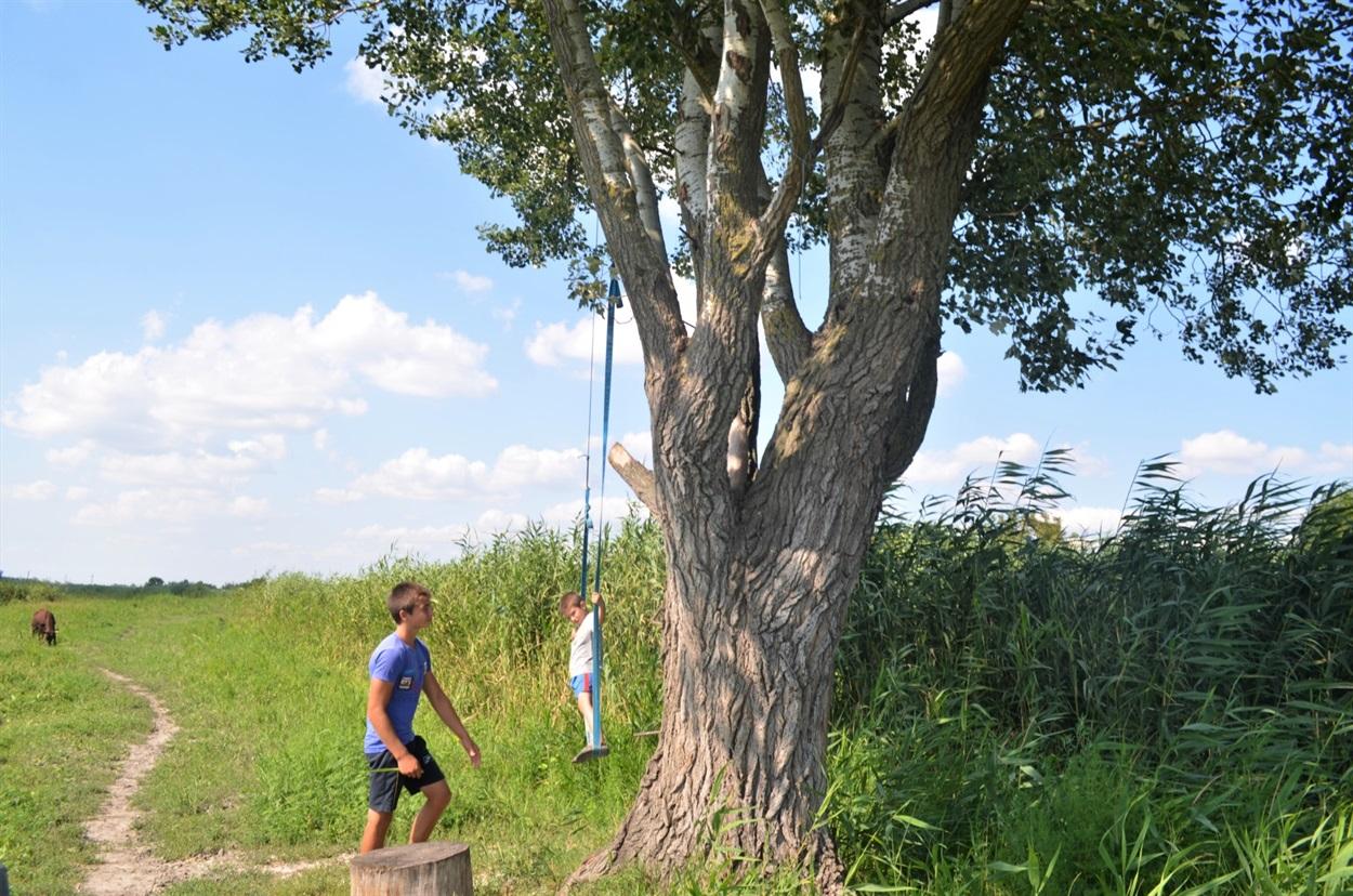В Беляевке подросток высадил 120 деревьев (фото) «фото»