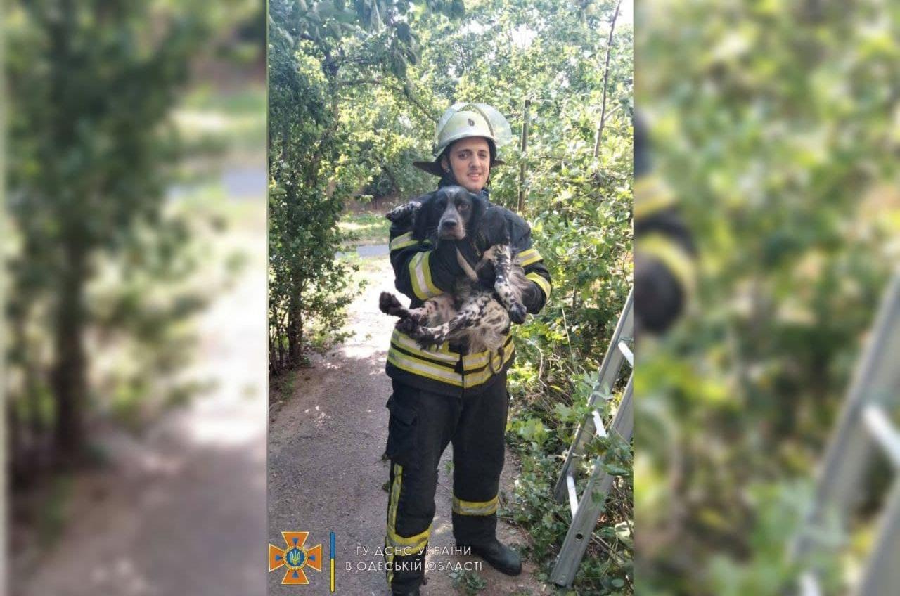 В Одессе собака упала с балкона на 6-м этаже (фото) «фото»