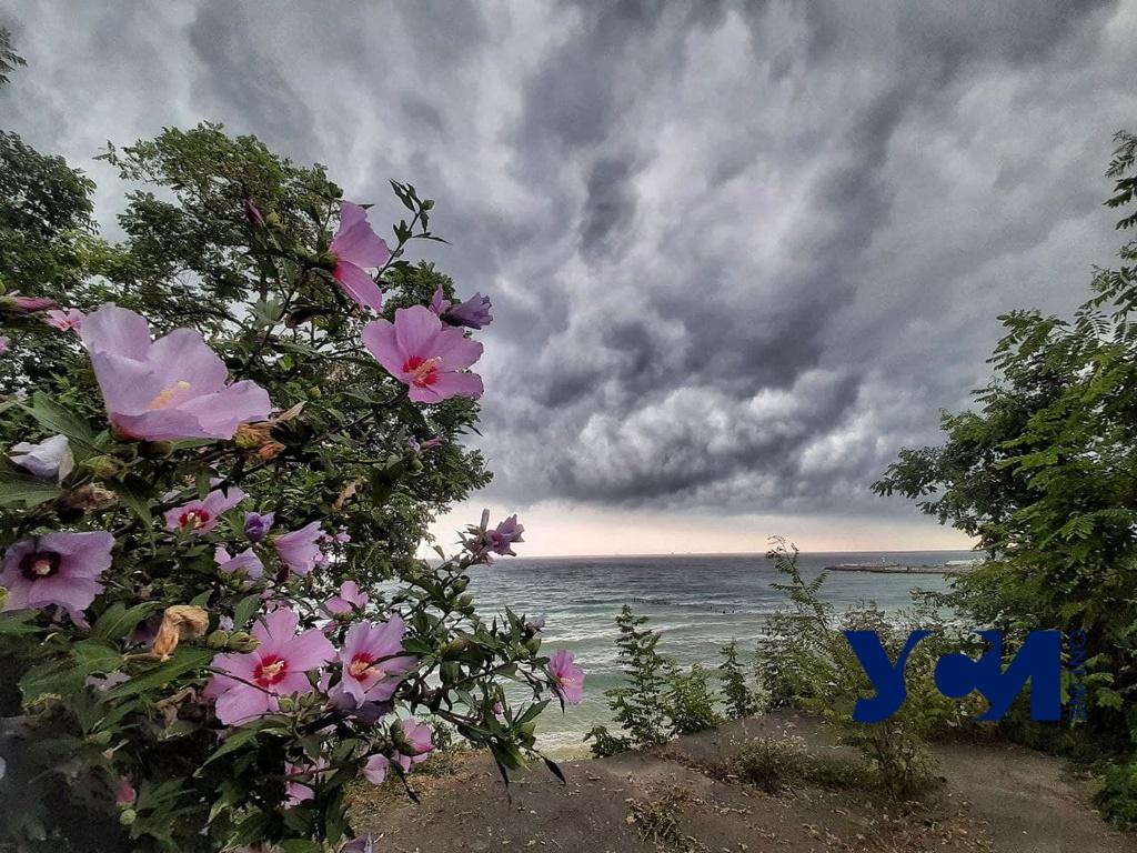 Осторожно, дождь: на Одесскую область надвигается гроза (фото) «фото»