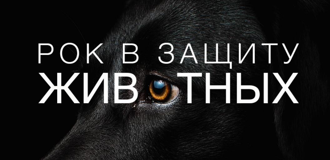 Рок и искусство: в Одессе пройдет фестиваль в поддержку бездомных животных «фото»