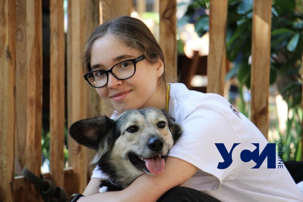 Home me: в Одессе проходит фестиваль, который дарит бездомным животным семью (фото) «фото»