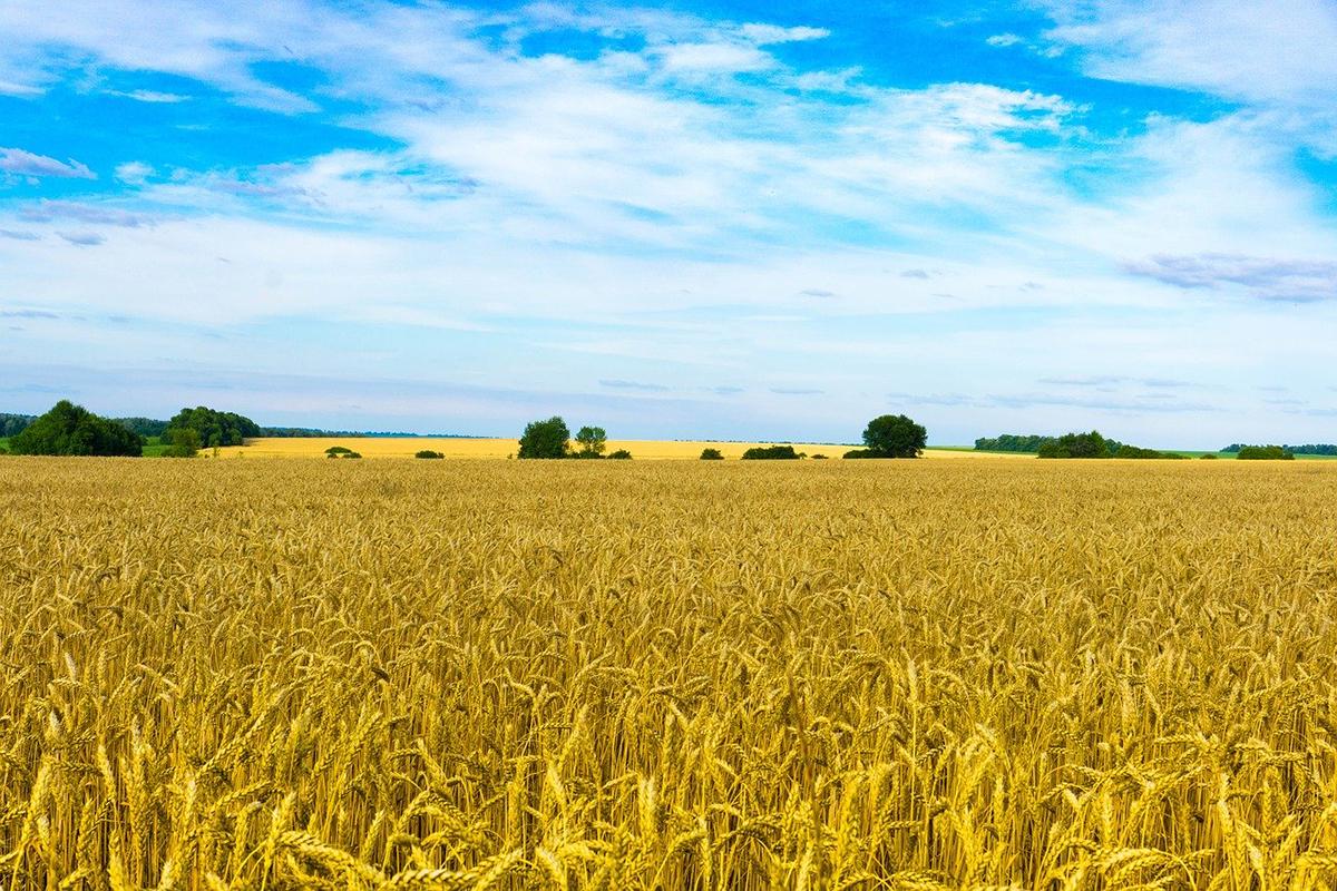 Рынок земли в Украине: Одесская область не спешит продавать участки «фото»