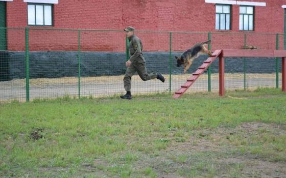 Собачье многоборье: одесский кинолог занял призовое место на всеукраинских состязаниях (фото) «фото»