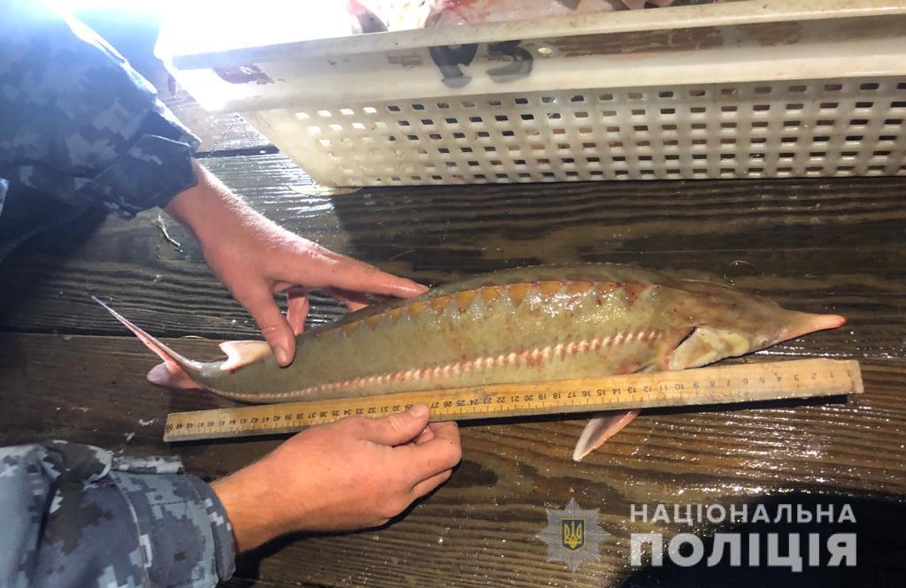 Жители Одесской области заплат 50 тысяч за рыбалку на осетровых (фото) «фото»