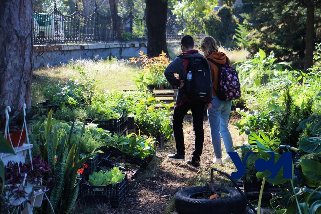 В Ботаническом саду проходит благотворительный осенний фестиваль (фото, аудио) «фото»