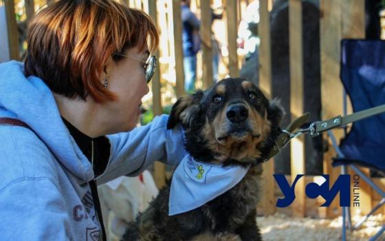 Home me fest: дом нашли 45 животных из одесских приютов «фото»