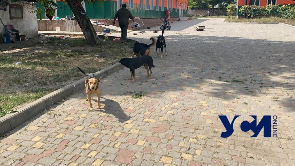Напали на маму с ребенком: стая бродячих собак держит в страхе персонал и пациентов детской больницы (фото, видео) «фото»