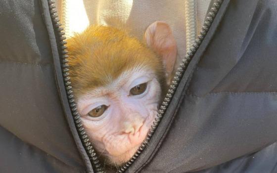 Как спасенную из контактного зоопарка обезьянку готовят к зиме одесские ветеринары (видео) «фото»