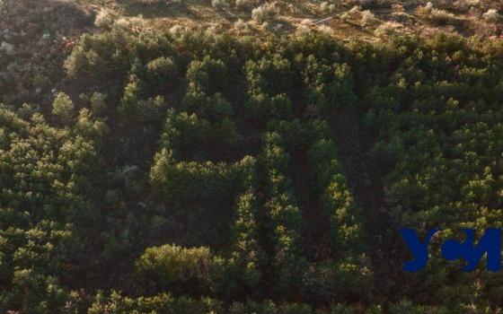 Осенний хвойный лес в Алтестово и его «СССР 50» (фото) «фото»